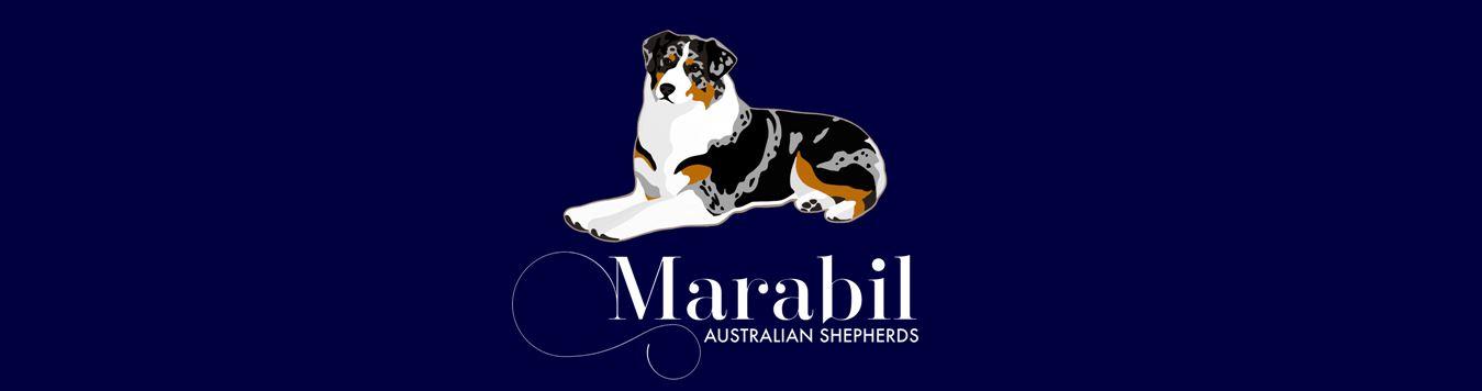 Marabil Australian Shepherds